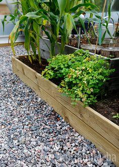 Istutusten ja nurmikon rajaus - Kotipuutarha Garden, Plants, Lawn And Garden, Gardens, Plant, Outdoor, Home Landscaping, Tuin, Planting