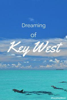 Dreaming of Key West's beautiful waters #keywest #dolphins #furykeywest