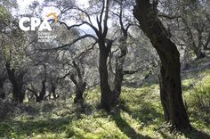 Corfu Island, Corfu Greece, Land For Sale, Beach, Plants, Seaside, Plant, Beaches, Planting
