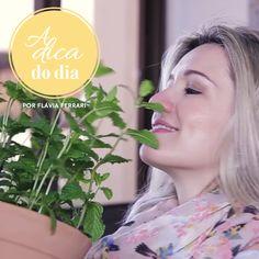 Dicas de como fazer uma horta em casa, plantando manjericão, salsinha, hortelã, lavanda, cebolinha | para mais dicas, clique na #aDicadoDia com Flávia Ferarri