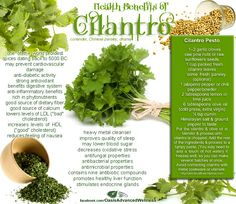 Health Benefits of Cilantro  Like us at www.facebook.com/OasisAdvancedWellness