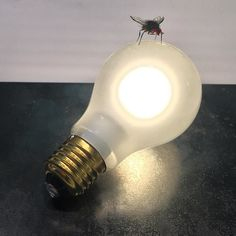 I Ricchi Poveri - Fly INGO MAURER 2014 Steel hand-made model of a fly. Limited edition. Light source 3 W 120 lm 2500 - 2900 K CRI 95 25.000 h EEC A.  Technical data 100240 V/ secondary 19 V. Continsously dimmable by touch sensor.  Dimensions Height approx. 95 cm width approx. ca 25 cm cable length 250 cm. More info Available since December 2015. Limited edition of 100 pieces.  http://ift.tt/1SB5IAg  ______________________________________________________  #madeingermany #design #architecture…