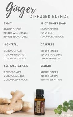 Diffuser recipes for Doterra ginger essential oil. Uses for ginger essential oil. Find out how to get your own essential oils here Helichrysum Essential Oil, Ginger Essential Oil, Doterra Essential Oils, Doterra Blends, Cedarwood Essential Oil Uses, Lemongrass Essential Oil, Spicy Ginger, Ginger Snap, Essential Oil Diffuser Blends