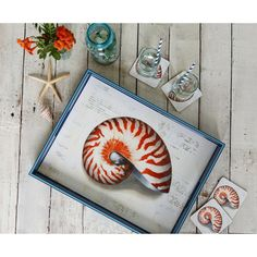 Nautilus Shell Serving Tray