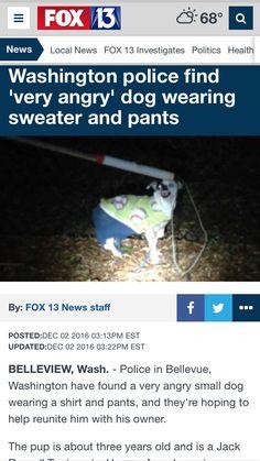 Seems like a normal dog to meMrLeedleWeedle - http://asianpin.com/seems-like-a-normal-dog-to-memrleedleweedle/