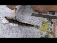How to Do Florida: Gyotaku, the Art of Fish Rubbing - YouTube