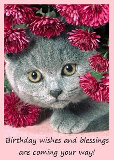 Cat Birthday Cards Online
