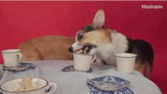 Don't mind if I do. | A Bunch Of Corgis Had A Tea Party To Celebrate The Queen's Historic Reign