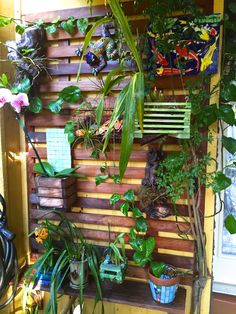 updated my orchid wall with some new plants and homemade orchid planters! Vertical wood garden wall.