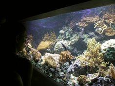Support your local public aquarium. Positive signs for public aquarius