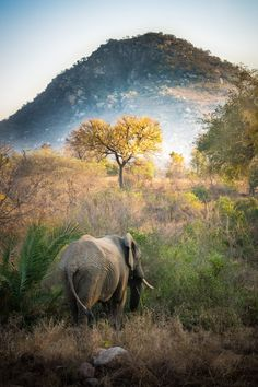 I like how this picture captures the environment around the elephant rather than focusing on the actual elephant. The savanna is the main focus of the picture. (I've been there, its gorgeous!)