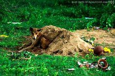 Indian Dog Holds Vigil over Owner's Grave for 15 Days