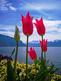 Colourful Montreux. Switzerland.