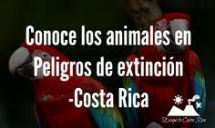 Conoce los animales en Peligros de extinción - #Costa Rica - @HIMGPanama