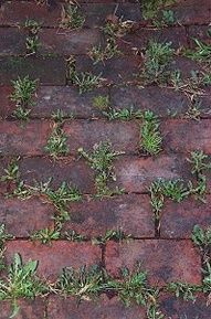 Baking soda neutralizes the ph in the soil and nothing will grow there. use baking soda around all of the edges of flower beds to keep the grass and weeds from growing into beds. Just sprinkle it onto the soil so that it covers it lightly. Do this twice a year  spring and fall