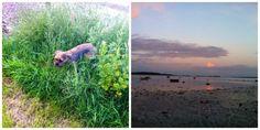 Smuk tur til Haldrup strand.!