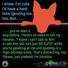 10 Things Service Dog Handlers Want You to Know | Anything PawsableAnything Pawsable