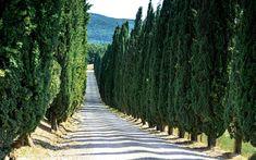 Borgo di Pietrafitta Ferienwohnungen im Chianti Toskana Tuscan Wedding, Siena, Traditional Wedding, People Like, Vineyard, Wedding Venues, Outdoor, Florence, Apartments