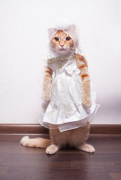 Know what's great about Catober, besides everything? Cats in costumes. #catober