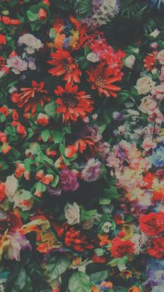 Trendy Ideas For Wallpaper Nature Backgrounds Floral Patterns Pastell Wallpaper, Iphone 6 Wallpaper, Nature Wallpaper, Screen Wallpaper, Cool Wallpaper, Phone Backgrounds, Wallpaper Backgrounds, Red Flower Wallpaper, Wallpeper Tumblr