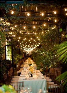 I would love to have lights like this at my reception and the plants!!