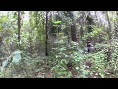 Exploring an old Railroad Trestle on The Suwannee River (Live Oak, Perry & Gulf Railroad) - YouTube