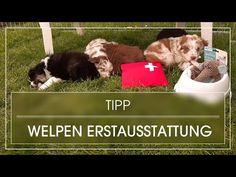 Ein Welpe Zieht Ein Erstausstattung Diese Erstausstattung Sollte Jeder Welpenbesitzer Haben Youtube In 2020 Welpen Hundeerziehung Hunde