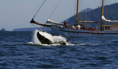 Haida Gwaii, known as the Queen Charlotte Islands,  130 islands along the west coast of BC, ancient rainforests, humpback whales, fishing, Native Cultures
