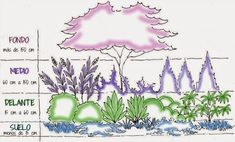 Landscape Design: Arranging Plants in the Landscape -- Figure Plant layers in staggered heights, with low plants in front and taller plants in back. Small Shrubs, Small Trees, Tall Plants, Large Plants, Plant Design, Garden Design, Evergreen Garden, Planting Plan, Plantar