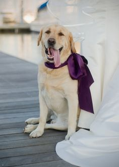 My dog will be in my wedding :)