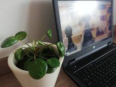 Ten kwiatuszek posiada ponoć dobrą energię przyciągania pieniędzy 😉 Aktualnie testuję jego działanie 🤣 A poza tym jest śliczny i oczyszcza powietrze, o! Laptop, Electronics, Laptops, Consumer Electronics