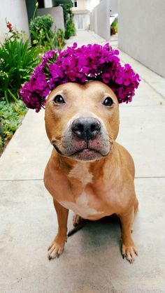 Summer is the perfect time for flower crowns!