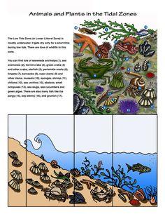 The Intertidal Zones - Tide Pool Habitat Ocean Zones, Under The Sea Decorations, Pool Activities, Primary Science, Water Cycle, Tide Pools, Forest School, Marine Biology, Biomes