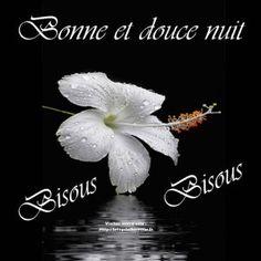 Image Bonne Nuit 272 meilleures images du tableau bonne nuit en 2019 | good night