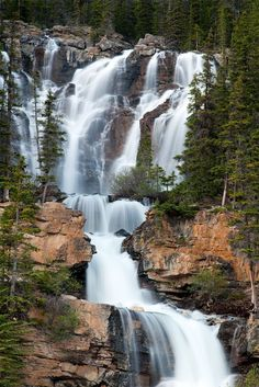 """This truly inspiring waterfall is about 8 km.north of the Columbia Icefields in Jasper National Park Alberta along highway 93. Many people fall to notice it even though it is right beside the highway with a rest stop on the west side of the road. Its a fairly easy scramble up to the base of the falls, keeping in mind that the wet rocks can be """"Very Slippery"""". One of the finest hikes in Jasper when started at the Wilcox Creek campground south of the icefields and traveled the entire 11 or..."""