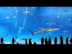 Okinawa Churaumi Aquarium (Japan)