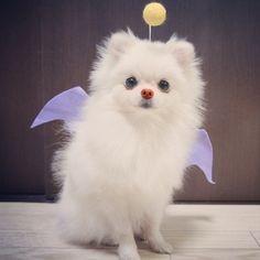 Todos los perros van al cielo.