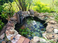 I recycled old concrete and bricks to make a pond with an old tap as a water feature.