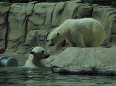 Toledo Zoo in Toledo, OH, visited in 2013.