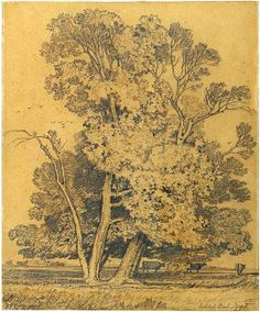 John Sell Cotman - Trees and Cows at Ashtead Park, Surrey - The Morgan Library & Museum - Collections