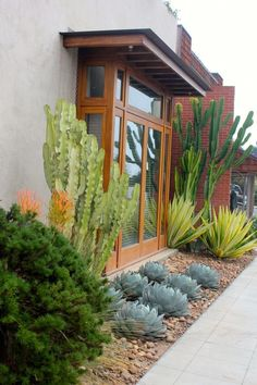 Austin we could interpret this with Jerusalem thorn trees for height, 'Color Guard' yuccas for yellow and green spikes, Agave parryi truncata (low, blue agaves), and rosemary or copper canyon daisy for the rounded green shrub in the foreground. Succulent Landscaping, Front Yard Landscaping, Succulents Garden, Backyard Landscaping, Landscaping Ideas, Backyard Ideas, Succulent Planters, Succulent Arrangements, Modern Landscaping