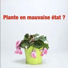 L'Astuce Géniale Pour SAUVER une Plante en MAUVAIS État.