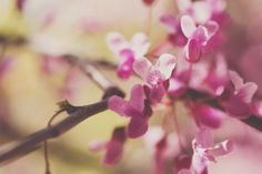 Branches Flowers Pink Tree Nature HD Wallpaper