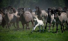 5 images de chevaux - Frawsy