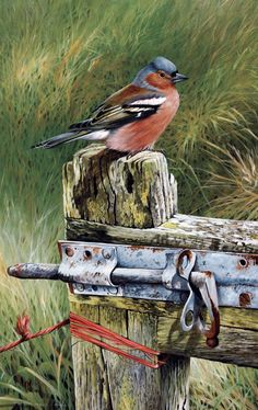 Terance James Bond art Terance James Bond was born in 1946 in the County of… Watercolor Bird, Watercolor Animals, Watercolor Paintings, Bird Pictures, Pictures To Paint, Pretty Birds, Beautiful Birds, Bird Artists, Bird Drawings