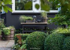 Pias och Lindas trädgård — Almbacken Trädgårdsdesign Little Lime Hydrangea, Hydrangea Paniculata, Garden Inspiration, Outdoor Decor, Mayfly, Home Decor, Gardening, Sink Tops, Garden