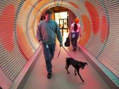 A Zynga employee walks through the time tunnel w/ his dog inside the company's new San Francisco headquarters.