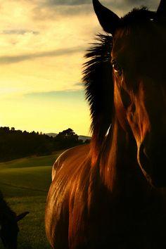 66ca56954c5 horse Cute Horses