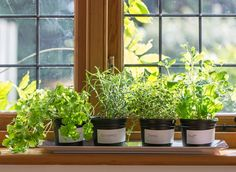 These healing plants are natural remedies for anxiety, headaches and more -- plus, you can grow them in a windowsill herb garden.