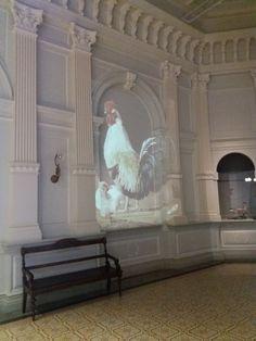 Ateneum national gallery von Wright brothers exhibition